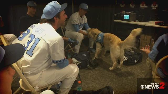 Unc Baseball Team Service Dog