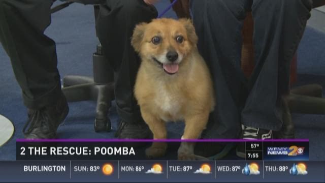 2 the Rescue: Poomba