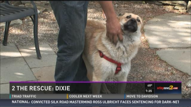 2 The Rescue Dixie