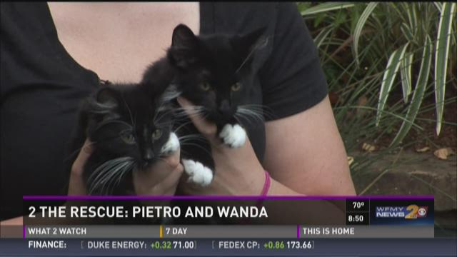2 The Rescue:  Pietro And Wanda