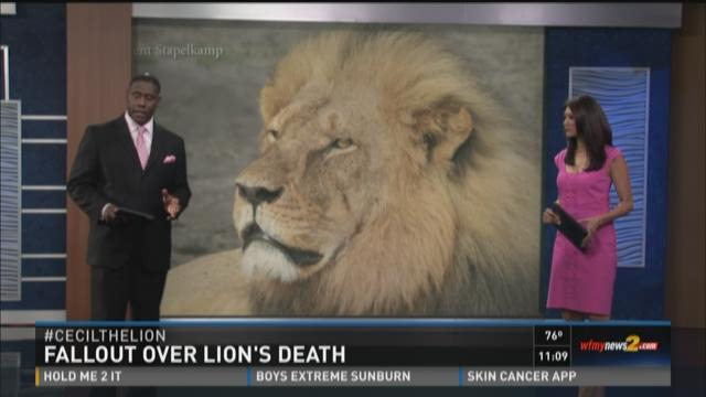 Much-loved Zimbabwean lion called Cecil which was allegedly