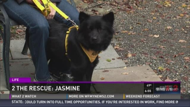 2 The Rescue:  Jasmine