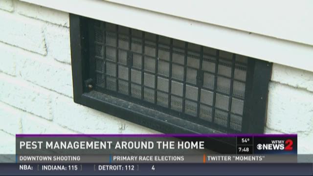 Pest Management Around The Home 4
