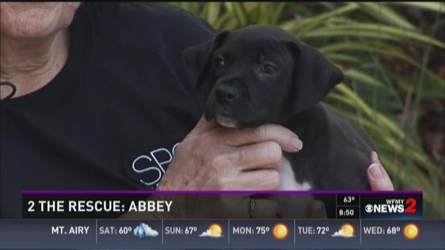 2 The Rescue:  Abbey