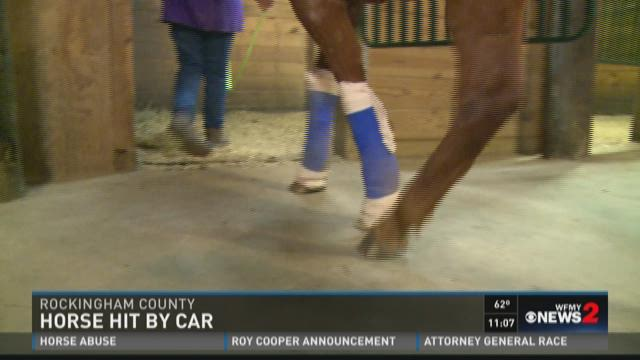 Horse hit by car in Rockingham County